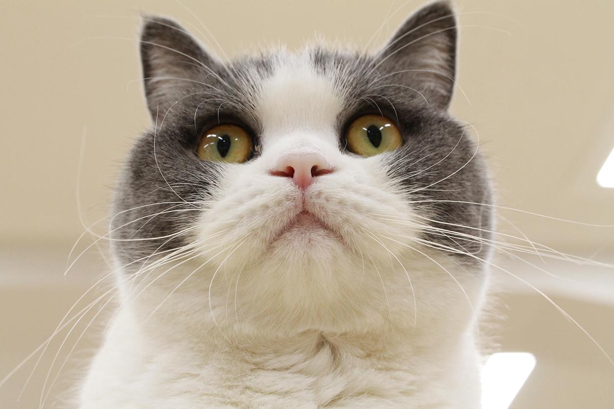 今日は猫の日?