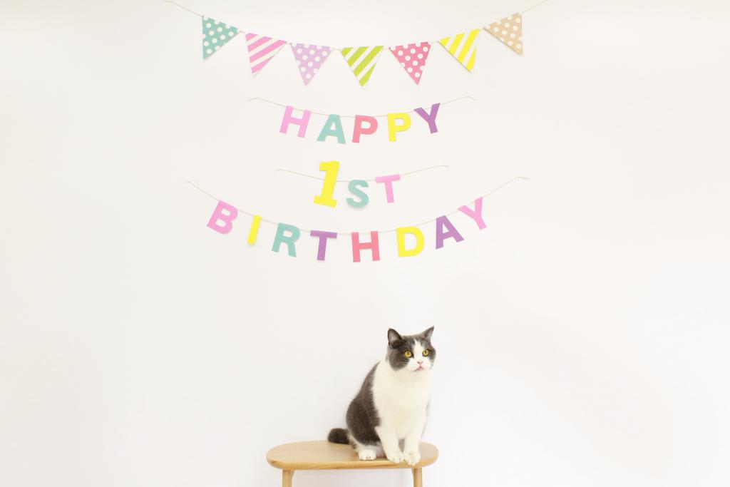 オフィス猫のまる美が1歳になったのでお祝いをしました!