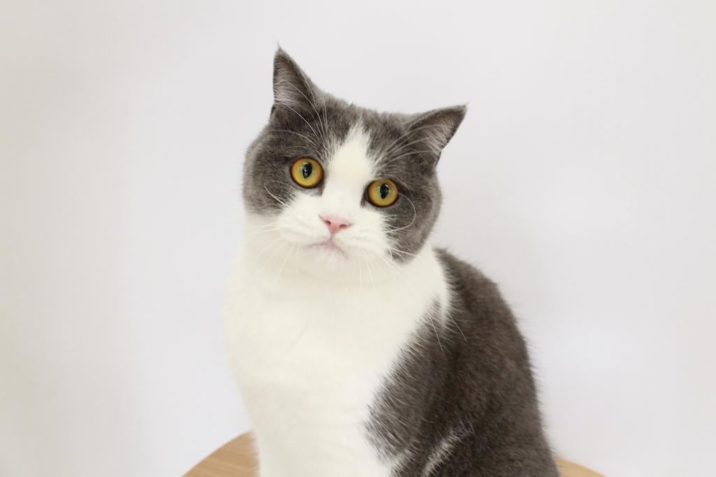 オフィス猫のまる美がネッ担ネコノミクス研究所に掲載されました