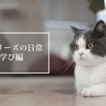オーリーズの日常・学び編
