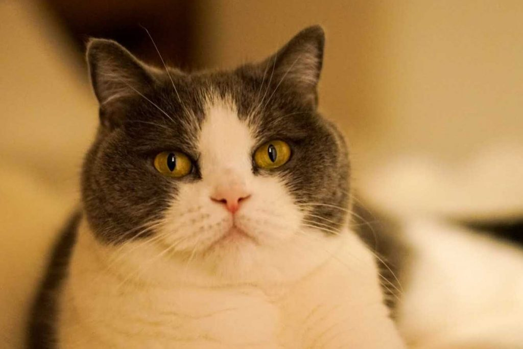 猫社員・まる美のお仕事レポート