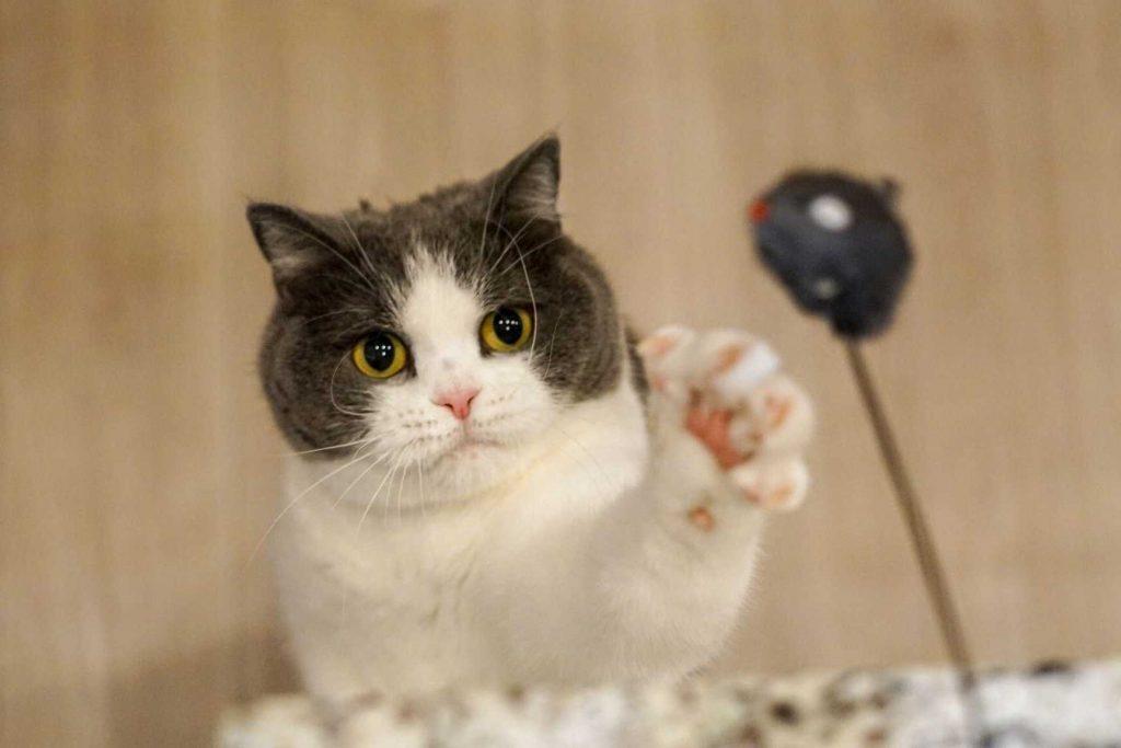 猫社員・まる美が5歳になりました!