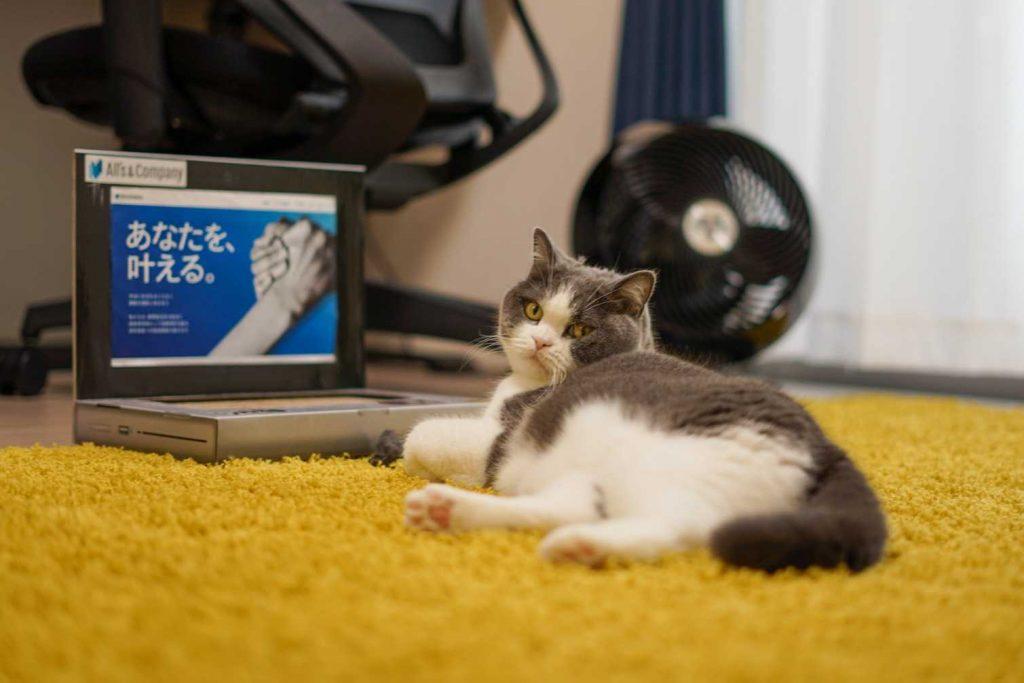 在宅勤務中の猫社員・まる美にお仕事道具を支給しました